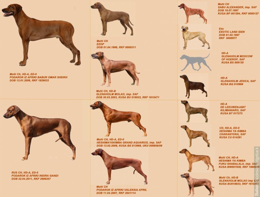 puppies pedigree